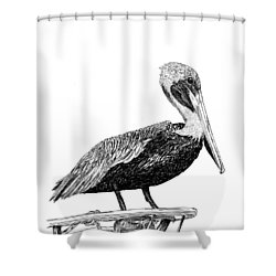 Pelican Of Monterey Shower Curtain by Jack Pumphrey