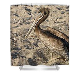 Pelican On Beach Shower Curtain by DejaVu Designs