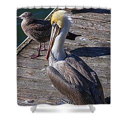 Pelican On Dock Shower Curtain