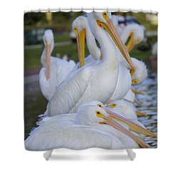 Pelican Pile Shower Curtain by Laurie Perry
