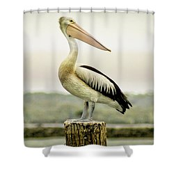 Pelican Poise Shower Curtain by Holly Kempe