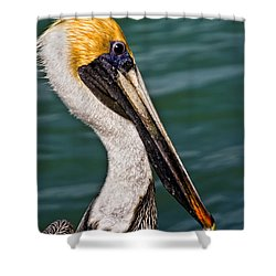 Pelican Profile No.40 Shower Curtain by Mark Myhaver