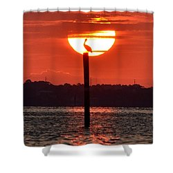 Pelican Silhouette Sunrise On Sound Shower Curtain by Jeff at JSJ Photography