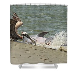 Pelican Steals The Fish Shower Curtain