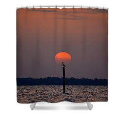 Pelican Sunrise Silhouette On Sound Shower Curtain by Jeff at JSJ Photography