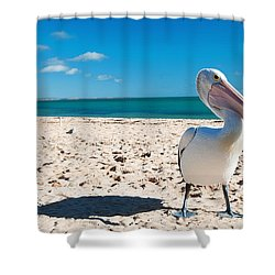 Pelican Under Blue Sky Shower Curtain