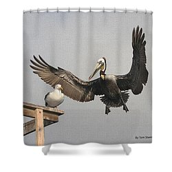Pelican Wins Sea Gull Looses Shower Curtain by Tom Janca