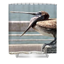 Pelican Yawn - Digital Painting Shower Curtain by Carol Groenen