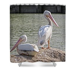 Shower Curtain featuring the photograph Pelicans By The Pair by Ella Kaye Dickey