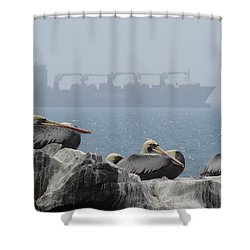 Pelicans In The Mist Shower Curtain by Ramona Johnston