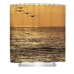 Pelicans Ocean And Sunsetting Shower Curtain by Tom Janca