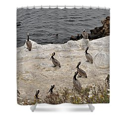 Pelicans Seals N Daisies  Shower Curtain