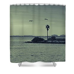 Pelicants And Palm Shower Curtain by Marvin Spates
