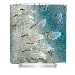 Pellican Frenzy Shower Curtain by Stuart Turnbull