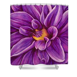 Shower Curtain featuring the drawing Pencil Dahlia by Janice Dunbar