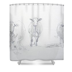 Pencil Drawing Of Three Cows Shower Curtain