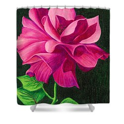 Shower Curtain featuring the drawing Pencil Rose by Janice Dunbar