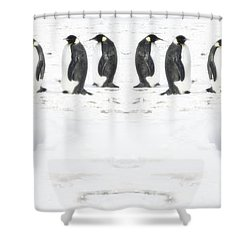 Shower Curtain featuring the photograph Penguin Lunch Time by R Muirhead Art