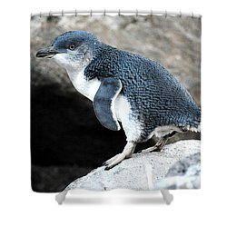 Shower Curtain featuring the photograph Penguin by Yew Kwang