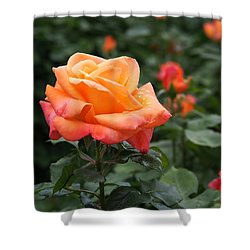 Pensioners Voice Roses Shower Curtain by Rona Black