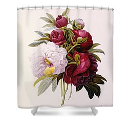 Peonies Engraved By Prevost Shower Curtain by Pierre Joseph Redoute
