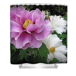 Peonies In White And Lavender Shower Curtain