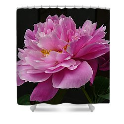 Shower Curtain featuring the photograph Peony Blossoms by Lingfai Leung