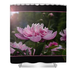 Shower Curtain featuring the photograph Peony Garden Sun Flare by Patti Deters