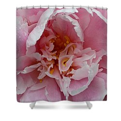 Peony Love Shower Curtain by Julie Andel