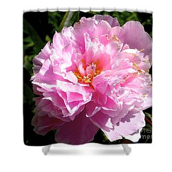Shower Curtain featuring the photograph Peony by Sher Nasser