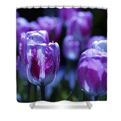 Shower Curtain featuring the photograph Peppermint Candies by Joe Schofield