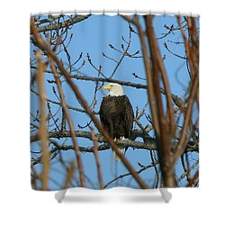 Perched American Bald Eagle  Shower Curtain by Neal Eslinger