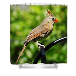 Shower Curtain featuring the photograph Perched Cardinal by Lizi Beard-Ward