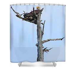 Perched Eagle Shower Curtain
