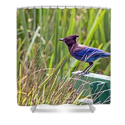 Shower Curtain featuring the photograph Perching Jay by Kate Brown