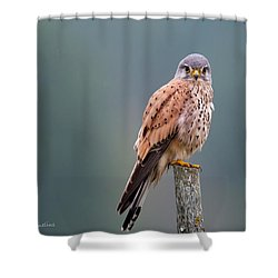 Perching Shower Curtain by Torbjorn Swenelius