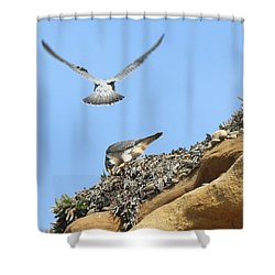 Peregrine Falcons - 2 Shower Curtain