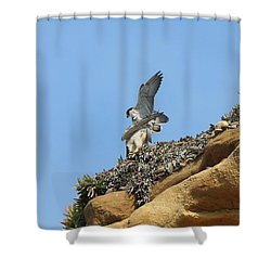 Peregrine Falcons - 3 Shower Curtain