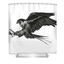 Peregrine Hawk Or Falcon Black And White With Pen And Ink Drawing Shower Curtain by Mario Perez
