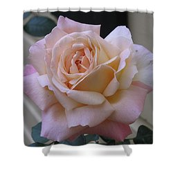 Perfect Blushing October Rose Shower Curtain