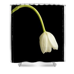 Perfect Love Shower Curtain by Edward Fielding