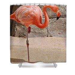 Perfect Pink Flamingo Shower Curtain by DejaVu Designs