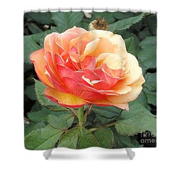 Shower Curtain featuring the photograph Perfect Rose by Janette Boyd