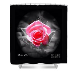 Perfect Rosebud In Black Shower Curtain by Becky Lupe