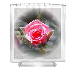 Perfect Rosebud In The Light Shower Curtain