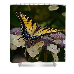 Perfect Tiger Swallowtail Butterfly Shower Curtain by Byron Varvarigos