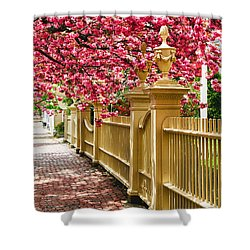 Perfect Time For A Spring Walk Shower Curtain