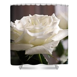 Perfect White Rose Shower Curtain