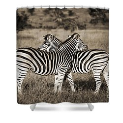 Perfect Zebras Shower Curtain by Delphimages Photo Creations