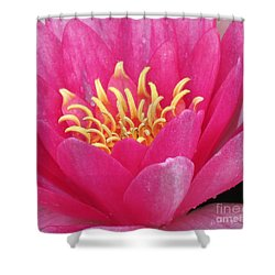 Perry's Fire Opal Water Lily Shower Curtain